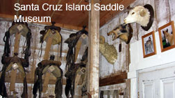 SCRI Saddle Museum